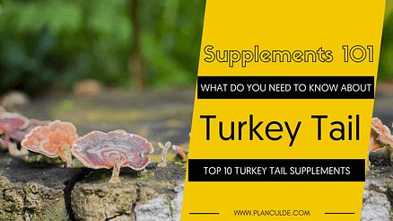 TOP 10 TURKEY TAIL SUPPLEMENTS