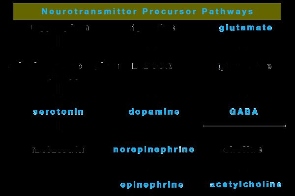 Precursors Of The Neurotransmitters