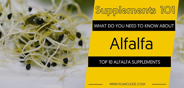 TOP 10 ALFALFA SUPPLEMENTS