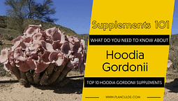 TOP 10 HOODIA GORDONII SUPPLEMENTS